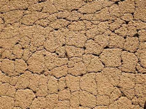 top 28 perennials clay soil sedum t rex perennial med 24 28 quot plant 32 quot apart my