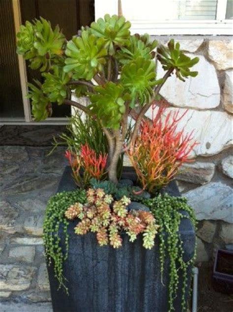 simply succulent plant designs los angeles orange county great potted succulent arrangement