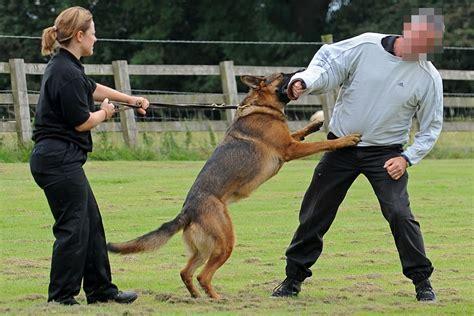 police dog police dog training schools www imgkid com the image