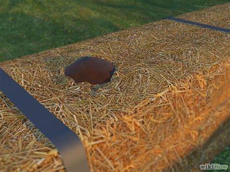 straw bale garden wall how to grow a straw bale garden 9 steps with pictures wikihow