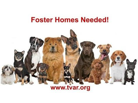foster homes for dogs foster homes needed for program danville ca patch