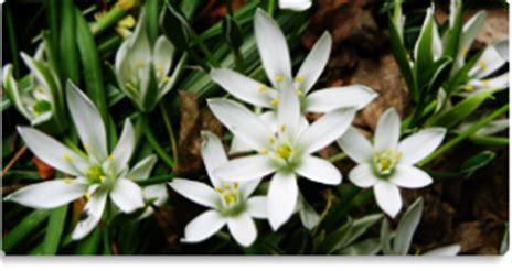 fiori di bach of bethlehem of bethlehem fiore di bach per i traumi per chi si