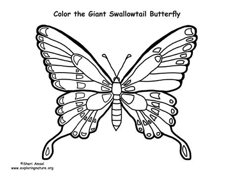 butterfly coloring page pdf butterfly giant swallowtail coloring page