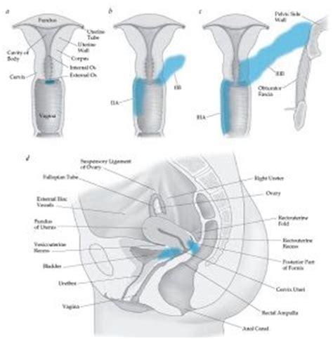 cervical cancer diagram 1409 best human anatomy diagram images on