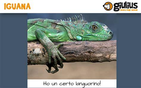 alimentazione iguana l alimentazione vegetariana dell iguana giulius