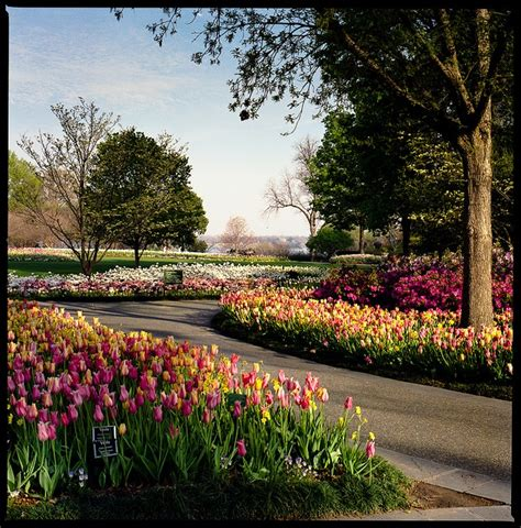 Dallas Flower Garden 11 Best Images About Bulb Gardening On Gardens Glow And Flower Bed Designs