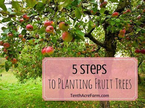 planting fruit trees in fall 17 best images about garden on gardens