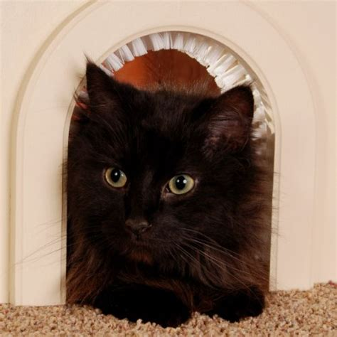 Cat Door Interior Cat Door Cathole Interior Pet Door With Cleaning Brush Purrfect Cat Breeds