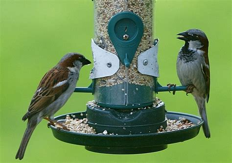 5 ways to attract beautiful birds to your yard off the