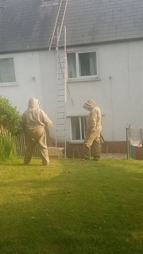 dead bees in house family who kept finding dead bees in house discovered a swarm of 10 000 in their