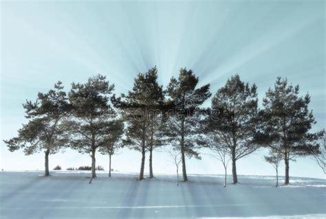 alberi illuminati riga degli alberi illuminati in inverno fotografia stock