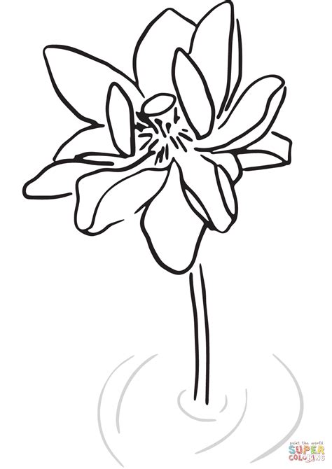 disegni fiore di loto disegno di fiore di loto stilizzato da colorare disegni