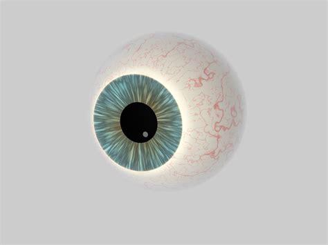 eyeball cross section human eye cross section eyeball 3d model obj 3ds fbx c4d