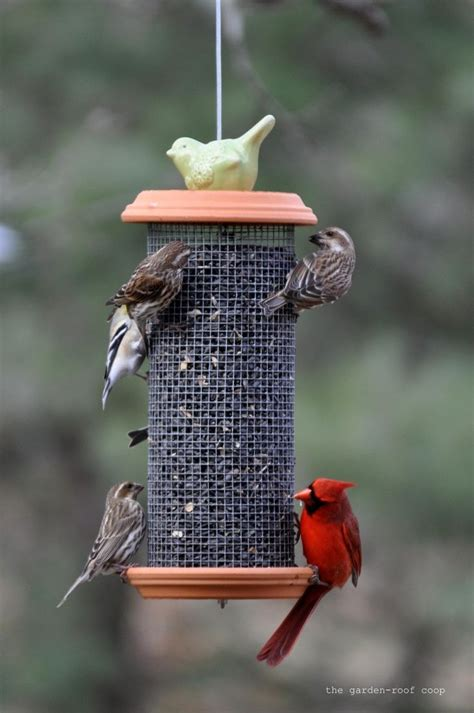 Cardinal Bird Feeder Free Cardinal Bird Feeder Plans Woodworking Projects Plans