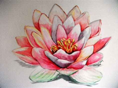 watercolor flowers lotus lotus