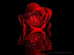 rosas rojas animadas con movimiento y frases cortas de