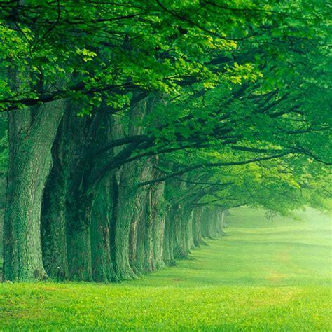 sugli alberi frasi sugli alberi