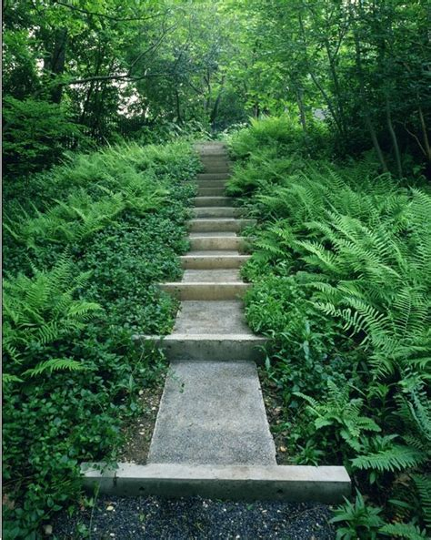 Fern Garden Ideas Ferns Around The Path Landscape Ideas Pinterest