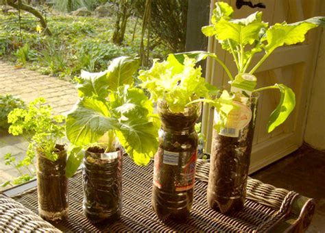 recycled garden containers growing vegetables and tree saplings in recycled bottles