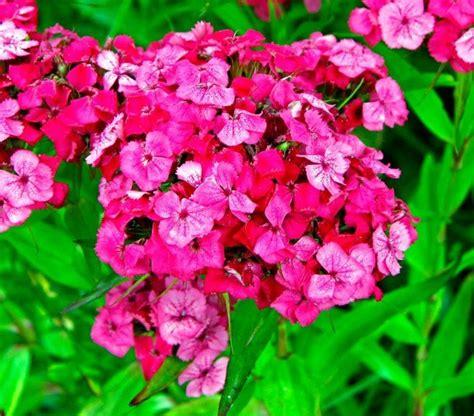 fiori mese di luglio in edicola dal 23 giugno casa in fiore di luglio cose di