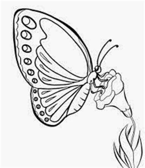 dunia sketsa gambar sketsa kupu kupu