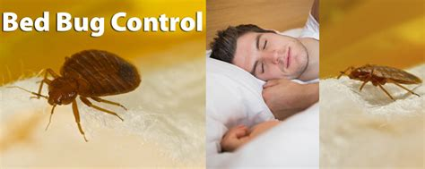 professional bed bug exterminators bed bug treatment get rid of bed bugs with senske pest