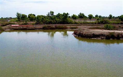Cara Membuat Alat Ukur Ph Tanah tips memilih lokasi tambak maulana says green 3