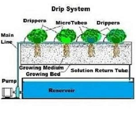 Drip System Hydroponic Gardens How To Set Up Drip Irrigation System For Vegetable Garden