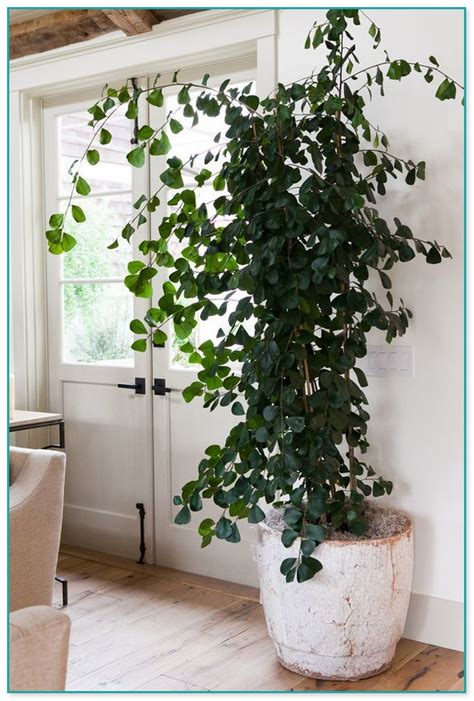 biggest house plants pictures of big house plants