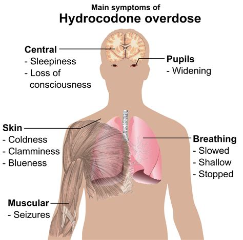 Can You Use Tylenol For Norco Detox Withdrawal by Possible Norco Causing Overdoses In
