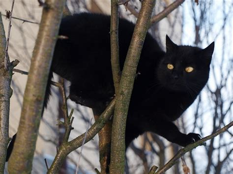 common superstitions 13 common but silly superstitions friday the 13th