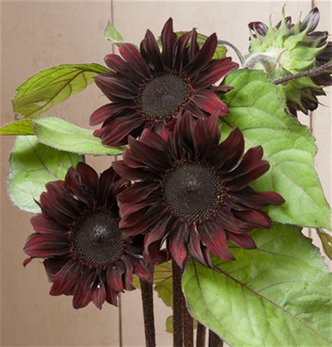 jim s favorite sunflower seeds