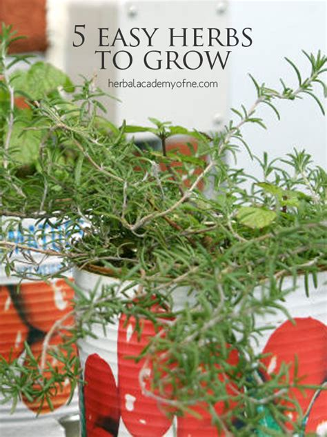 easy herbs to grow inside to grow herbs herbal academy 5 easy herbs to grow herbal