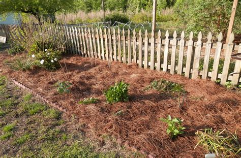 mulch beds what ingredients create our spiritual mulch i was