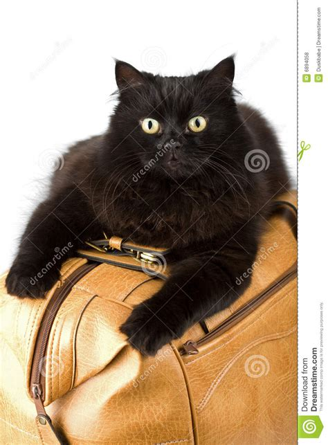 Cat Time Black Leather black cat on a leather bag isolated royalty free stock