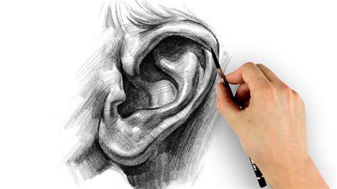 kumpulan gambar telinga