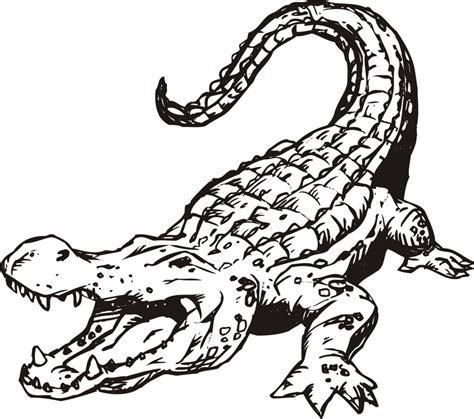 alligator coloring page free printable alligator coloring pages for