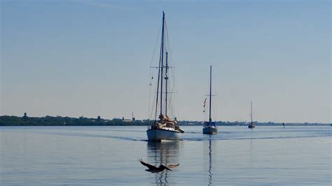 venice fl boat tours sightseeing boat rides tours with kokomo charters