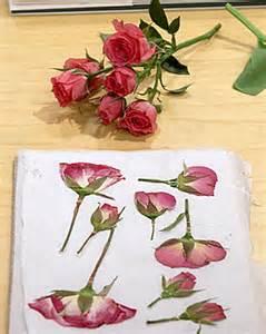 6 fun ways to use pressed flowers handmade charlotte