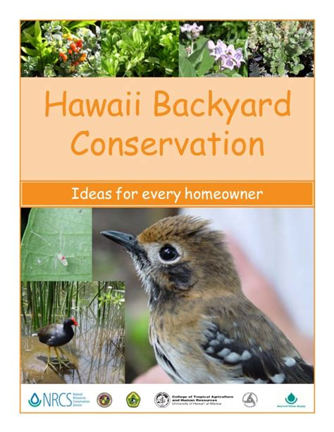 backyard conservation hawaii backyard conservation ideas for every homeowner