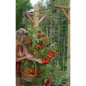 ultimate vegetable trellis skyscraper garden free shipping