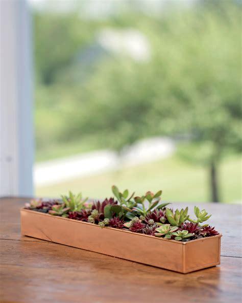 copper plant tray rectangle  gardenerscom