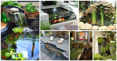 backyard aquarium 14 innovative aquarium ideas for the backyard top