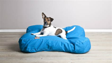 divani cani divani per cani relax a quattro ze dalani e ora westwing