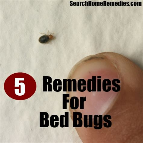 home remedies for bed bugs top 5 herbal remedies for bed bugs how to get rid of bed