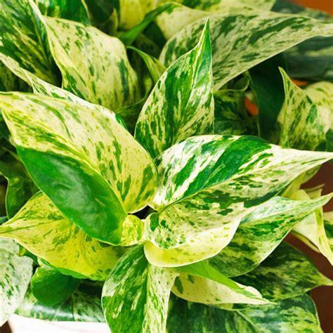 100 houseplants for low light easy houseplants that 9 houseplants for the forgetful gardener