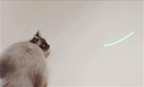 rag doll gif ragdoll cat gif find on giphy