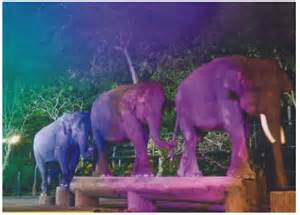 milly s jungle adventures the jungle talent show books safari the safari show dinner bali