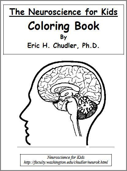 coloring book for biology printable science worksheets lab sheets color pages