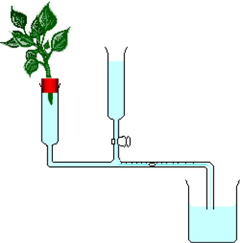 design experiment rate of transpiration school science potometer wikibooks open books for an